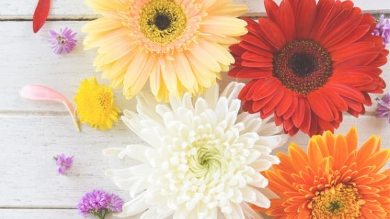 various colored daisies on a wooden table