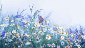 butterflies in a flower garden