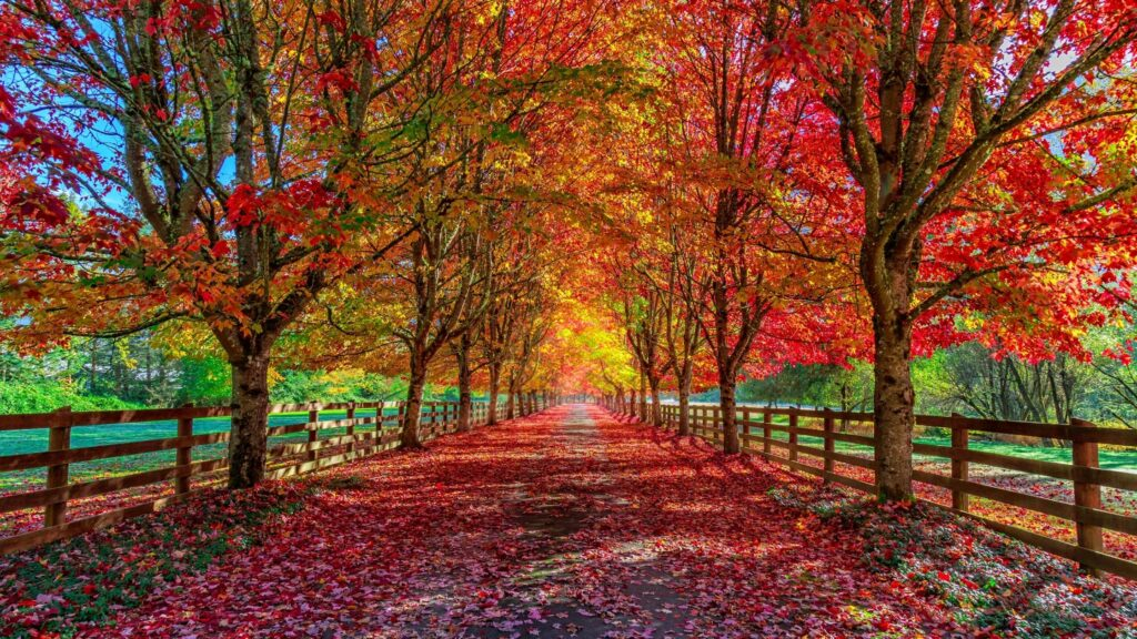 autumn landscape of a leaf-covered road under trees with the colors of fall falling to the ground