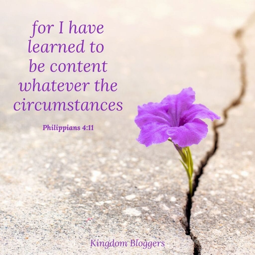 Philippians 4.11 on a picture of a purple flower coming out of a crack in the sidewalk